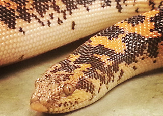 Bothell reptile vet services