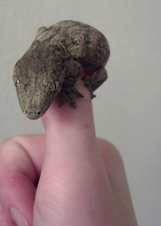 Lizard on thumb bothell wa vet