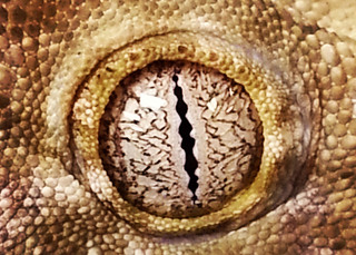 Reptile eye at vet in bothell