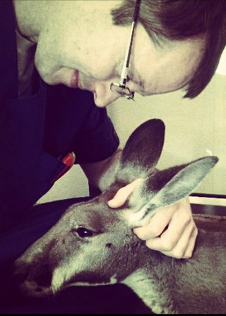 Vet with kangaroo bothell