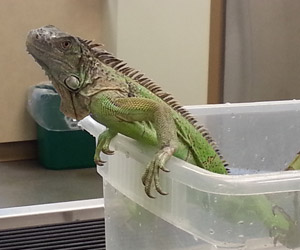 Pets receive adult pet care at The Center for Bird and Exotic Animal Medicine