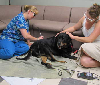Laser Therapy for your pet