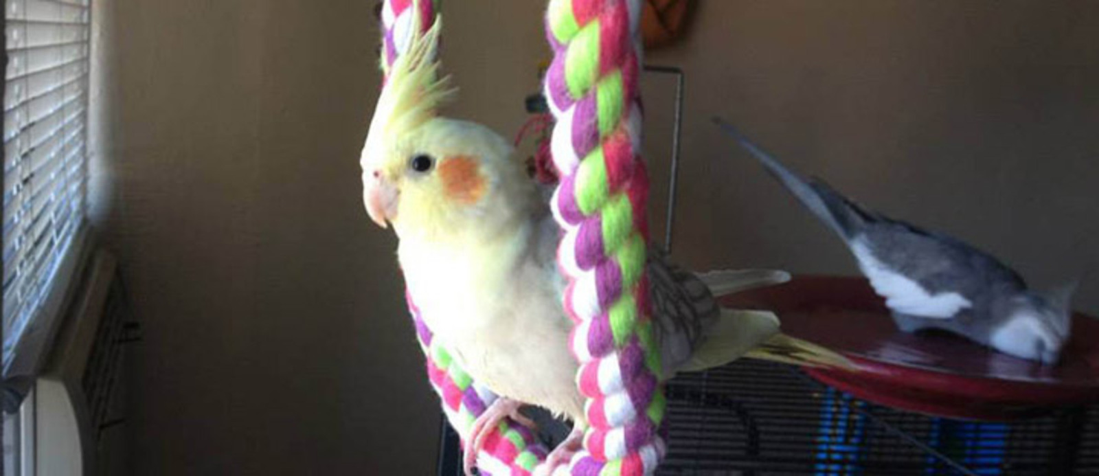 Bothell Animal Hospital | The Center for Bird and Exotic Animal Medicine