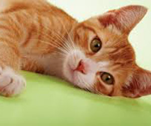 Declaw Your Cat in Poquoson, VA