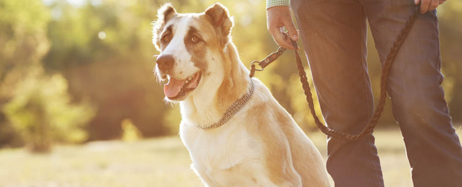 Midland Animal Hospital | Midland Animal Clinic