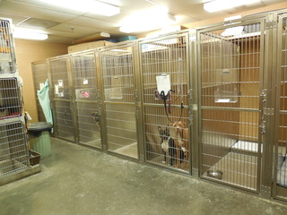 Kennels at woodlake vet
