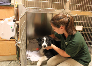 Vet with dog after sugery bel air