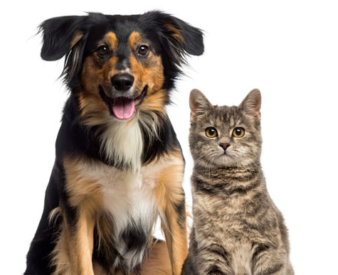 Check out the pet policy at Somerset Apartment Homes.
