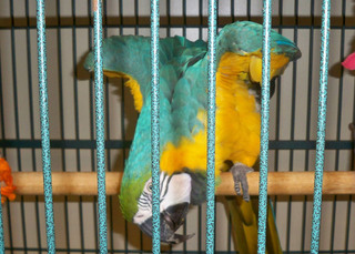 Orlando vet office offers services for your parrot
