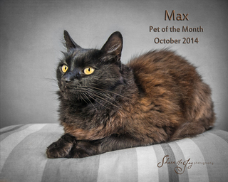 Max pet of the month october