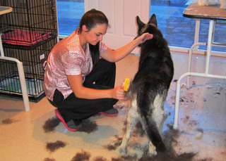 Ft myers grooming services