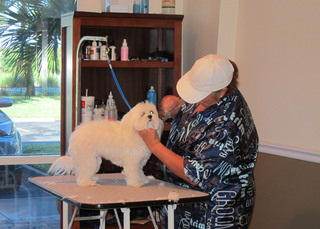 Ft myers offers grooming services