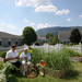 Thumb-green-mountain-gardening-manchester-center-senior-living