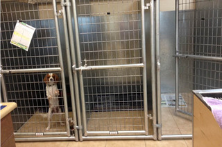 Kennels at murrieta veterinary hospital