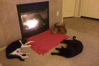 Cats laying by fireplace at murrieta veterinary hospital