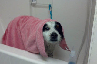 Dog bath time at murrieta veterinary