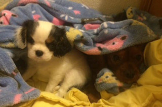 Puppy in blanket at murrieta