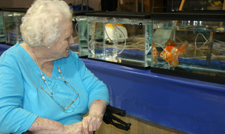 Clean fish tank in Greenville senior living