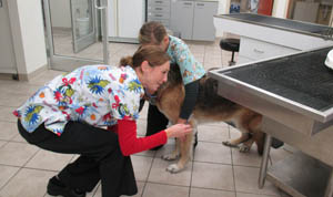 Learn more about veterinary hospital policies at Augusta Valley Animal Hospital Staunton
