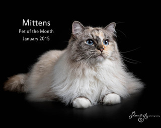 Mittens december 2014 pet of the month