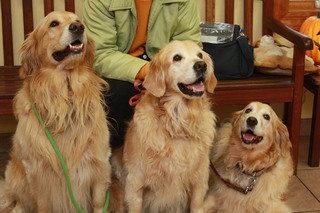 Happy golden retrievers at valley animal hospital