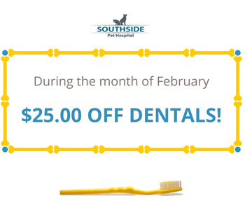 Dental Coupon