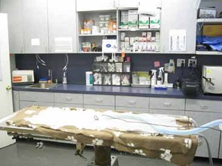 South shore animal hospital operating table