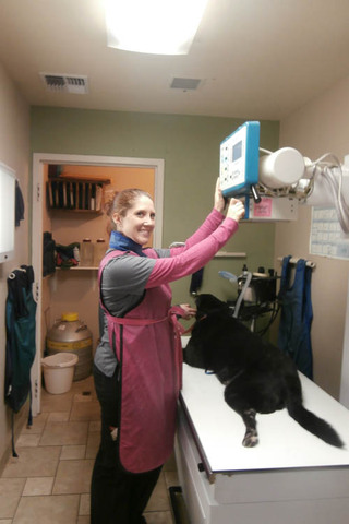 Digital x rays at minden veterinary clinic