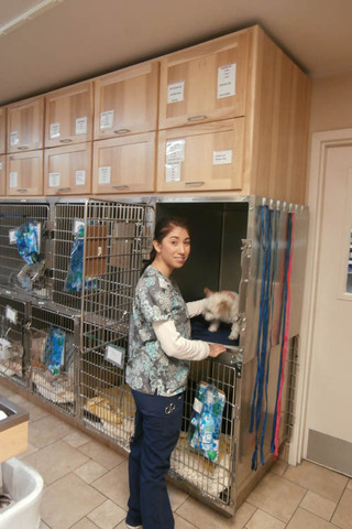 Treatment at minden veterinary clinic