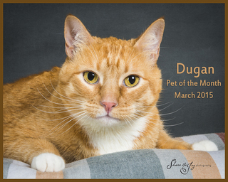 Dugan pet of the month march 2015