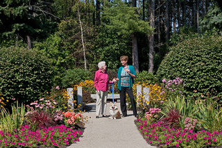Seniors walking a corgi scarborough maine senior living