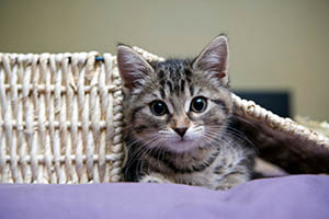 The Feline Medical Center Anesthetic Safety in your pet at Houston, TX