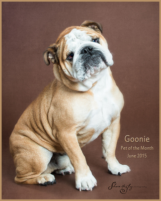 Goonie - June 2015 Pet of the Month