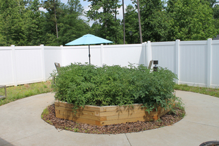 Garden grounds at our facility in youngsville nc