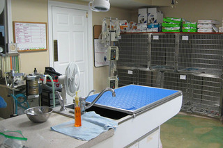 Critter care treatment