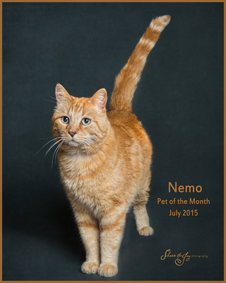 Nemo - July 2015 Pet of the Month