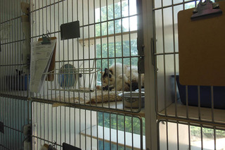 Animal hospital of signal mountain cat atrium