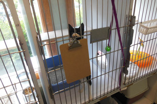 Animal hospital of signal mountain cat in atrium