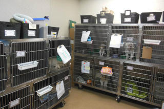 Animal hospital of signal mountain small dog ward