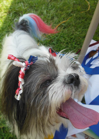 Dog dying booth at open house how patriotic maggie is when her tail goes it looks like a flag
