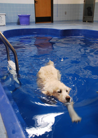 Aquatic exercise at our pet care hospital in lubbock tx