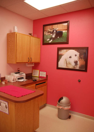 Exam room at our pet care hospital in lubbock tx