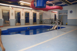 Indoor aquatic rehabilitation at our pet care hospital in lubbock tx