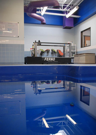 Indoor pool at our pet care hospital in lubbock tx