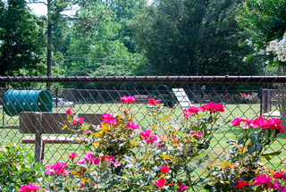 Rollingwood dog park 2 low res