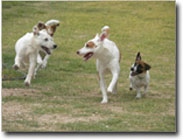 Play time at Above & Beyond Pet Care Hospital