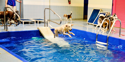 Doggie Pool at Above & Beyond Pet Care Hospital