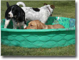 Wading Pool for Above & Beyond Pet Care Hospital Patients
