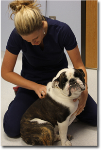Jenna Adjusting Amos at our chiropractic center inLubbock
