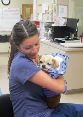 Vet tech with dog at care animal hospital